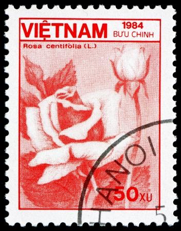 VIETNAM - CIRCA 1984: a stamp printed in Vietnam shows Cabbage Rose, Rosa Centifolia, Flower, circa 1984 Stock Photo - 17523420