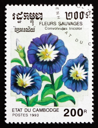 CAMBODIA - CIRCA 1993: a stamp printed in Cambodia shows Dwarf Morning Glory, Convolvulus Tricolor, Flower, circa 1993 Stock Photo - 17523442