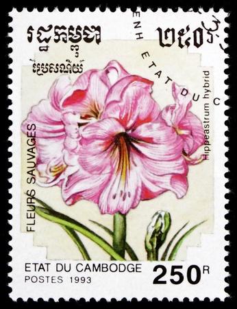 CAMBODIA - CIRCA 1993: a stamp printed in Cambodia shows Hippeastrum Hybrid, Flower, circa 1993 Stock Photo - 17523435