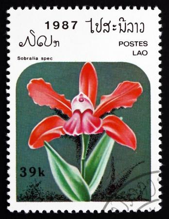 LAOS - CIRCA 1987: a stamp printed in Laos shows Sobralia Spec, Orchid, Flower, circa 1987 Stock Photo - 17523441