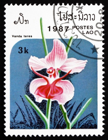 LAOS - CIRCA 1987: a stamp printed in Laos shows Vanda Teres, Orchid, Flower, circa 1987 Stock Photo - 17523444