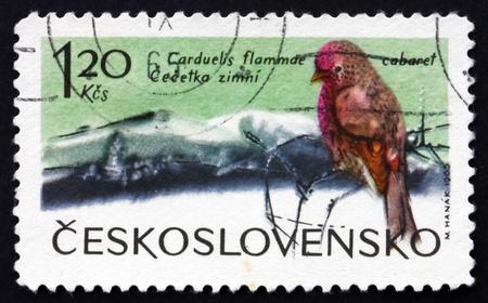 passerine: Cecoslovacchia - CIRCA 1965: un francobollo stampato in Cecoslovacchia mostra Organetto minore, Carduelis cabaret, uccello passeriforme, circa 1965