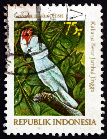 INDONESIA - CIRCA 1981: a stamp printed in Indonesia shows Pink-crested Cockatoo, Cacatua Moluccensis, Moluccan Cockatoo, Bird, circa 1981 Stock Photo - 17523472