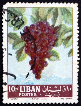 fruiting: LEBANON - CIRCA 1962: a stamp printed in the Lebanon shows Grapes, Vitis Vinifera, Fruiting Berry, circa 1962