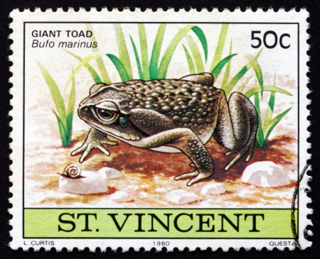 SAINT VINCENT - CIRCA 1980: a stamp printed in Saint Vincent shows Giant Toad, Bufo Marinus, Amphibian Animal, circa 1980