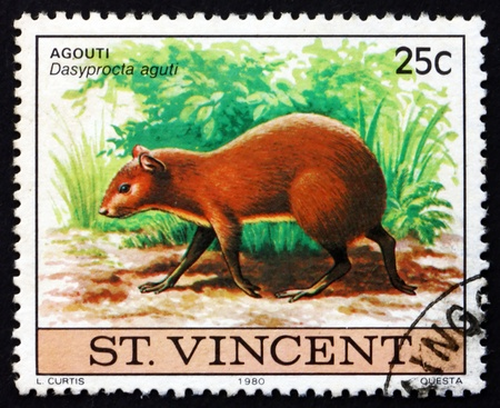SAINT VINCENT - CIRCA 1980: a stamp printed in Saint Vincent shows Agouti, Dasyprocta Aguti, Animal, circa 1980l
