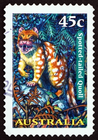 AUSTRALIA - CIRCA 1997: a stamp printed in the Australia shows Spotted-tailed Quoll, Tiger Quoll, Dasyurus Maculatus, Marsupial Animal, circa 1997