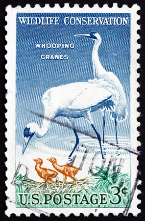 whooping: UNITED STATES OF AMERICA - CIRCA 1957: a stamp printed in the USA shows Whooping Cranes, Grus Americana, Wildlife Conservation, circa 1957 Editorial