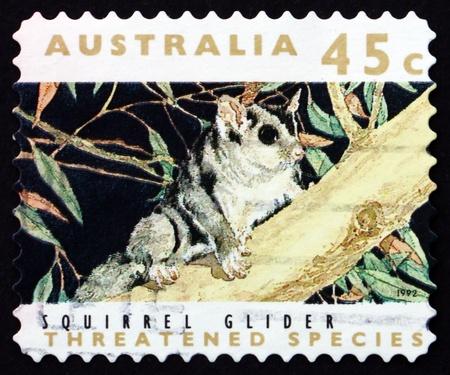 possum: AUSTRALIA - CIRCA 1992: a stamp printed in the Australia shows Squirrel Glider, Petaurus Norfolcensis, Nocturnal Gliding Possum, Marsupial Mammal, circa 1992