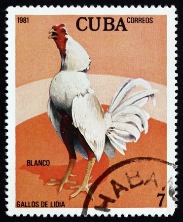 CUBA - CIRCA 1981: a stamp printed in the Cuba shows Blanco, Fighting Cock, circa 1981