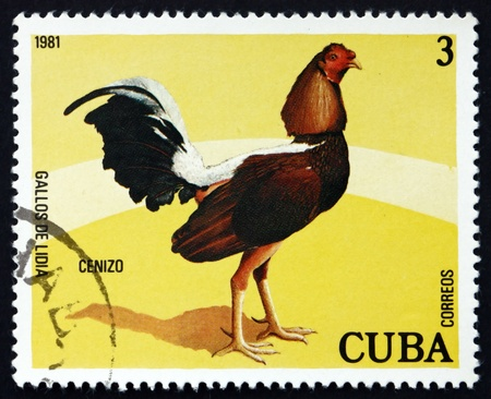CUBA - CIRCA 1981: a stamp printed in the Cuba shows Cenizo, Fighting Cock, circa 1981