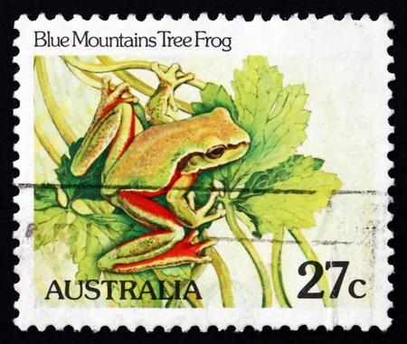 blue mountains tree frog: AUSTRALIA - CIRCA 1981: a stamp printed in the Australia shows Blue Mountains Tree Frog, Litoria Citropa, Amphibian, circa 1981