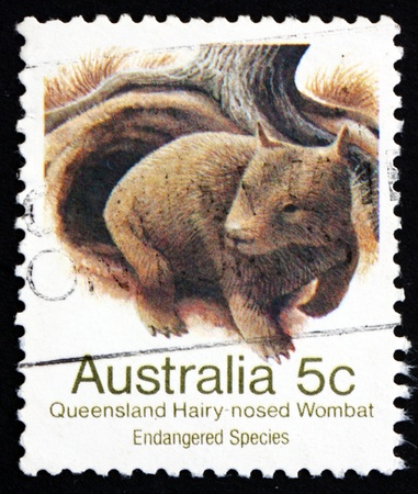 wombat: AUSTRALIA - CIRCA 1981: un sello impreso en Australia muestra Queensland de nariz peluda Wombat, Lasiorhinus krefftii, mamíferos marsupiales, alrededor de 1981