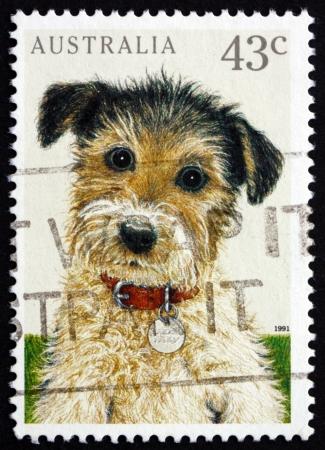 AUSTRALIE - CIRCA 1991: un timbre imprimé en Australie montre chiot, animal de compagnie, vers 1991