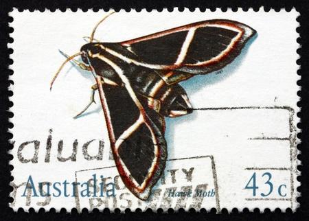sphingidae: AUSTRALIA - CIRCA 1991: a stamp printed in the Australia shows Hawk Moth, Sphingidae, Insect, circa 1991