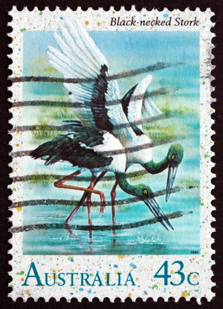 commemorate: AUSTRALIA - CIRCA 1991: a stamp printed in the Australia shows Black-necked Stork, Ephippiorhynchus Asiaticus, Wading Bird, circa 1991
