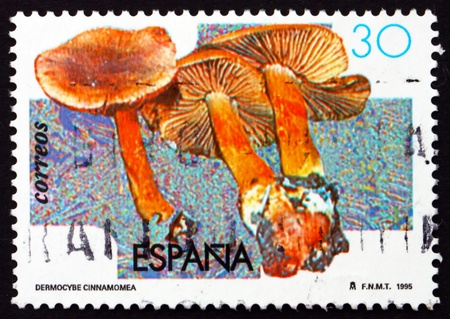 SPAIN - CIRCA 1995: a stamp printed in the Spain shows Dermocybe Cinnamomea, Mushroom, circa 1995 Stock Photo - 18883930