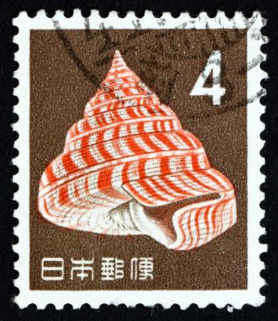 JAPAN - CIRCA 1963: a stamp printed in the Japan shows Emperor's Slit Shell, Perotrochus Hirasei, Sea Snail, Animal, circa 1963 Editorial