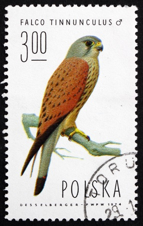 cancelled stamp: POLAND - CIRCA 1975: a stamp printed in the Poland shows Common Kestrel, Falcon, Falco Tinnunculus, Bird of Prey, Male, circa 1975 Editorial