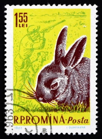 ROMANIA - CIRCA 1961: a stamp printed in the Romania shows Rabbit, Hunter with Dog, circa 1961