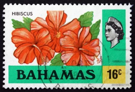 flowering plant: BAHAMAS - CIRCA 1976: un francobollo stampato in mostra Bahamas Ibisco, Hibiscus rosa-sinensis, piante, intorno al 1976 Editoriali