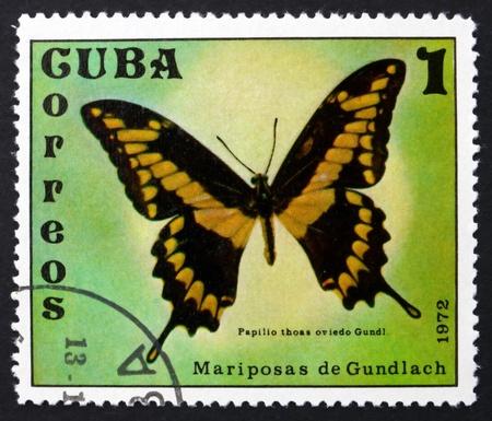 cuba butterfly: CUBA - CIRCA 1972: a stamp printed in the Cuba shows Papilio Thoas Oviedo, Thoas Swallowtail, Papilio Thoas, Butterfly, circa 1972 Editorial