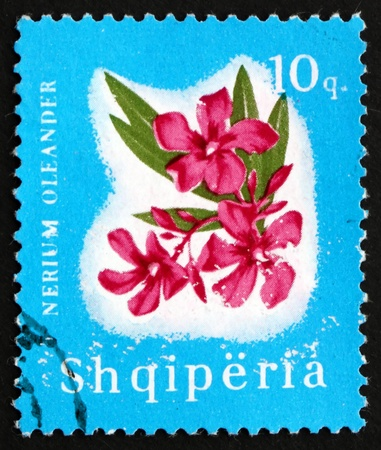 albanian: ALBANIA - CIRCA 1965: a stamp printed in the Albania shows Oleander, Nerium Oleander, Flower, circa 1965 Editorial