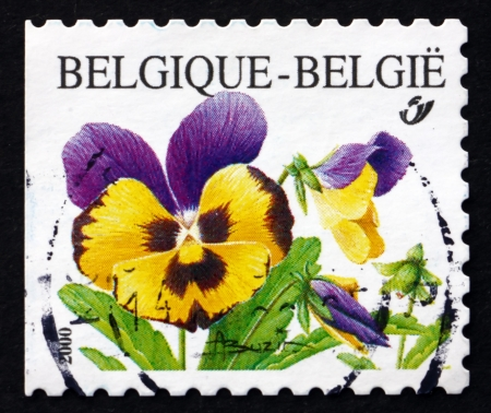 BELGIUM - CIRCA 2000: a stamp printed in the Belgium shows Violets, Pansy, Viola Tricolor, Flowering Plant, circa 2000
