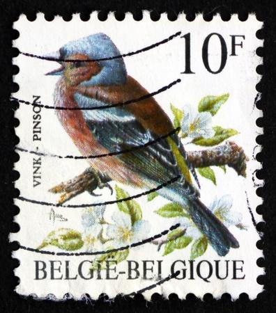 BELGIUM - CIRCA 1990: a stamp printed in the Belgium shows Pinson, Common Chaffinch, Fringilla Coelebs, Passerine Bird, circa 1990