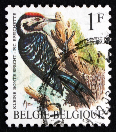 BELGIUM - CIRCA 1990: a stamp printed in the Belgium shows Lesser Spotted Woodpecker, Dendrocopos Minor, Bird, Pinson, Common Chaffinch, Fringilla Coelebs, Passerine Bird, circa 1990