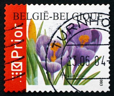 BELGIUM - CIRCA 2003: a stamp printed in the Belgium shows Crocuses, Crocus Sativus, Flowering Plant, circa 2003