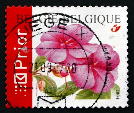 BELGIUM - CIRCA 2004: a stamp printed in the Belgium shows Impatiens, Flowering Plant, circa 2004