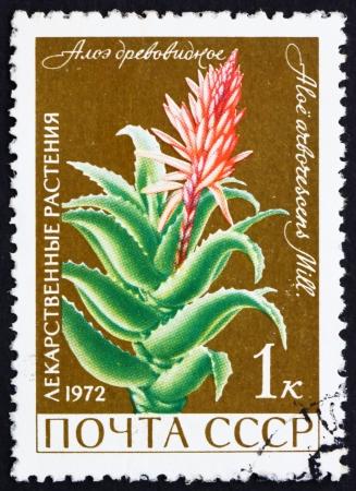medical  plant: Rusia - alrededor de 1972: un sello impreso en la Rusia muestra Aloe, planta medicinal, floraci�n Planta carnosa, alrededor del a�o 1972