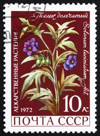medical  plant: Rusia - alrededor de 1972: un sello impreso en la Rusia muestra Nightshade, Solanaceae, planta medicinal, planta con flores, alrededor de 1972 Editorial