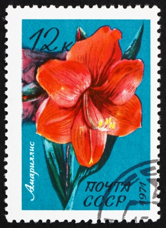 belladonna: RUSSIA - CIRCA 1971: a stamp printed in the Russia shows Belladonna Lily, Amaryllis, Flowering Bulb, circa 1971