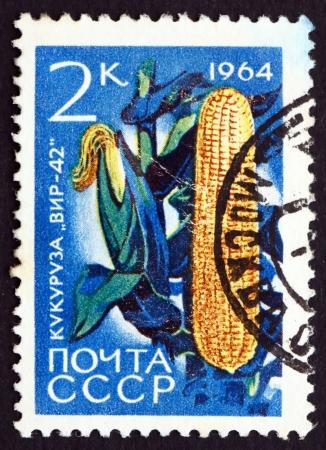 zea: RUSSIA - CIRCA 1964: a stamp printed in the Russia shows Corn, Zea Mays, Grain Plant, circa 1964 Editorial