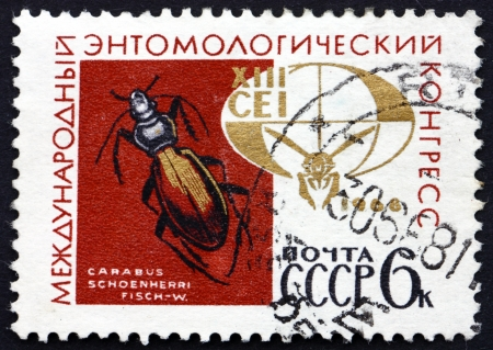 ground beetle: RUSSIA - CIRCA 1968: a stamp printed in the Russia shows Ground Beetle, Carabus Schoenherri, 13th Entomological Congress, circa 1968 Editorial