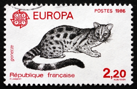 civet cat: FRANCE - CIRCA 1986: a stamp printed in the France shows Civet Cat, Viverridae, Animal, circa 1986 Editorial