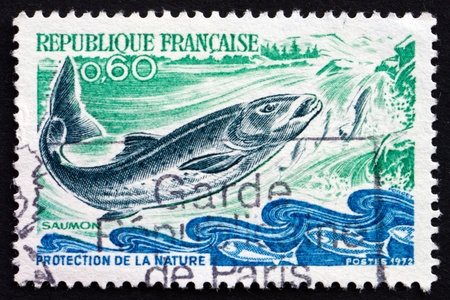 salmo: FRANCE - CIRCA 1972: a stamp printed in the France shows Salmon, Salmo Salar, Fish, Nature Protection, circa 1972
