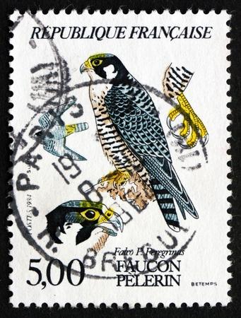 falco peregrinus: FRANCE - CIRCA 1984: a stamp printed in the France shows Peregrine Falcon, Falco Peregrinus, Bird of Prey, circa 1984