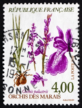 palustris: FRANCE - CIRCA 1992: a stamp printed in the France shows Anacamptis Palustris, Orchis Palustris, Orchid, circa 1992