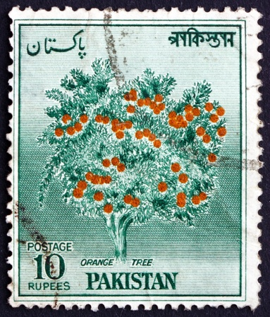 PAKISTAN - CIRCA 1957: a stamp printed in Pakistan shows Orange Tree, circa 1957 Stock Photo - 21754140
