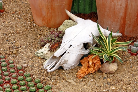 Cow skull as a decorative element in the garden photo