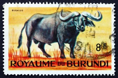 BURUNDI - CIRCA 1964: a stamp printed in Burundi shows Cape Buffalo, African Buffalo, Syncerus Caffer, Large African Bovine, circa 1964