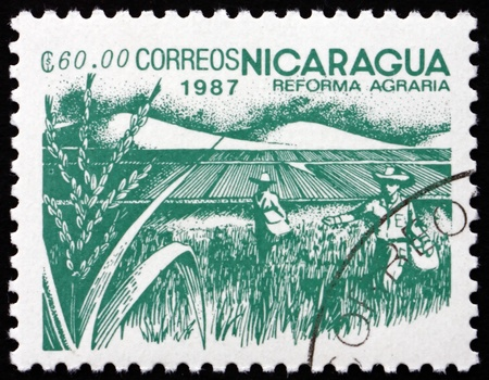 agrarian: NICARAGUA - CIRCA 1987: a stamp printed in Nicaragua shows Rice Paddy, Agrarian Reform, circa 1987