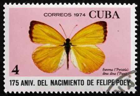 cuba butterfly: CUBA - CIRCA 1974: a stamp printed in the Cuba shows Dina Yellow, Eurema Dina Dina, Butterfly, circa 1974