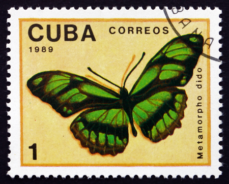 dido: CUBA - CIRCA 1989: a stamp printed in the Cuba shows Dido Longwing, Philaethria Dido or Metamorpho Dido, Butterfly, circa 1989