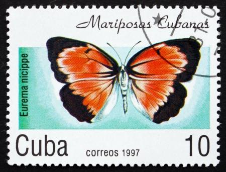 cuba butterfly: CUBA - CIRCA 1997: a stamp printed in the Cuba shows Sleepy Orange, Eurema Nicippe, Butterfly, circa 1997