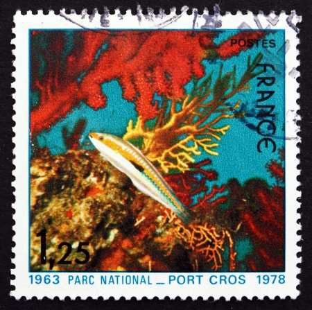 cros: FRANCE - CIRCA 1978: a stamp printed in the France shows Fish and Corals, Port Cros National Park, 15th Anniversary, circa 1978
