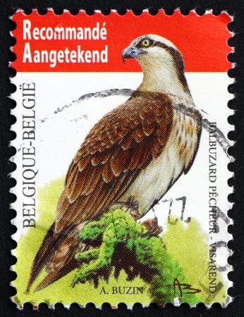 bird osprey: BELGIUM - CIRCA 2011: a stamp printed in the Belgium shows Osprey, Sea Hawk, Pandion Haliaetus, Bird, circa 2011